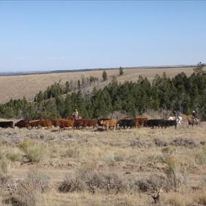 Canyon Meadows Ranch is Hiring!